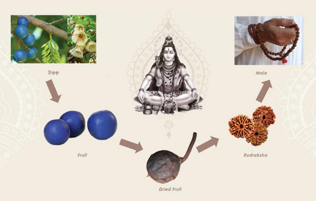 Rudraksha - the Benefits & Spiritual Power of India's Sacred